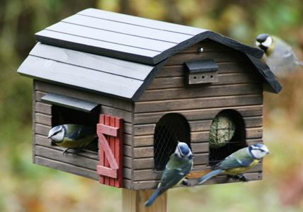 vögel am vogelhäuschen
